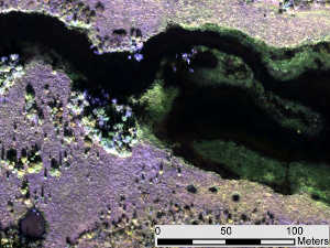 A sample of hyperspectral imagery over a small part of the Yukon wetlands